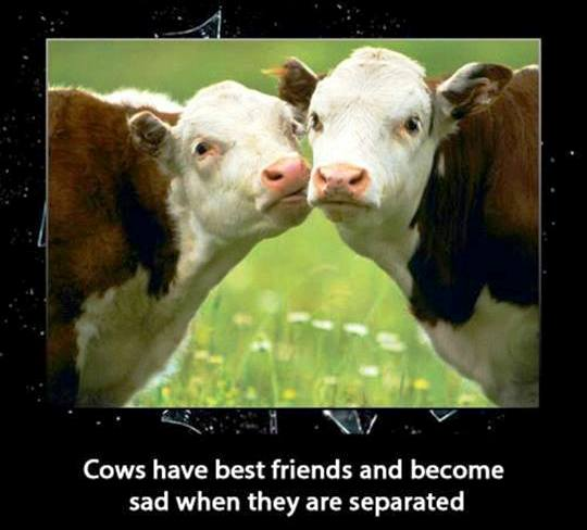 BEEF FOREVER BFF